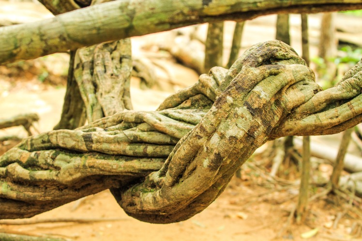 knotted tree limbs