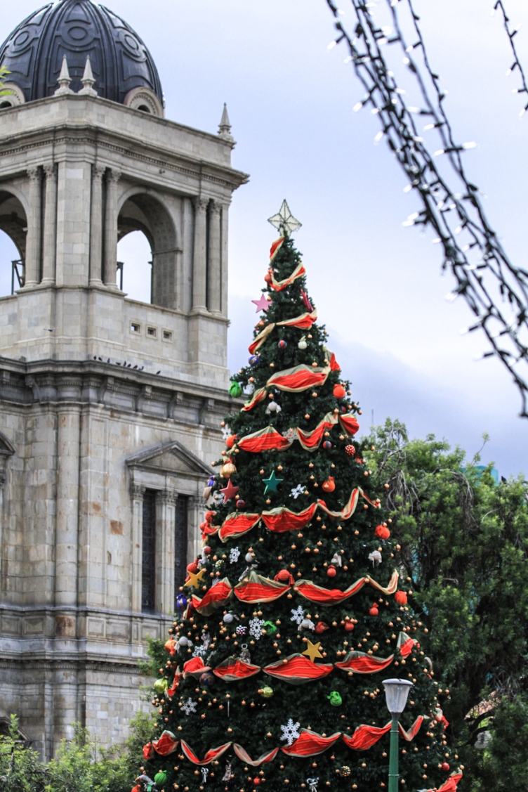 Christmas tree in the plaza.
