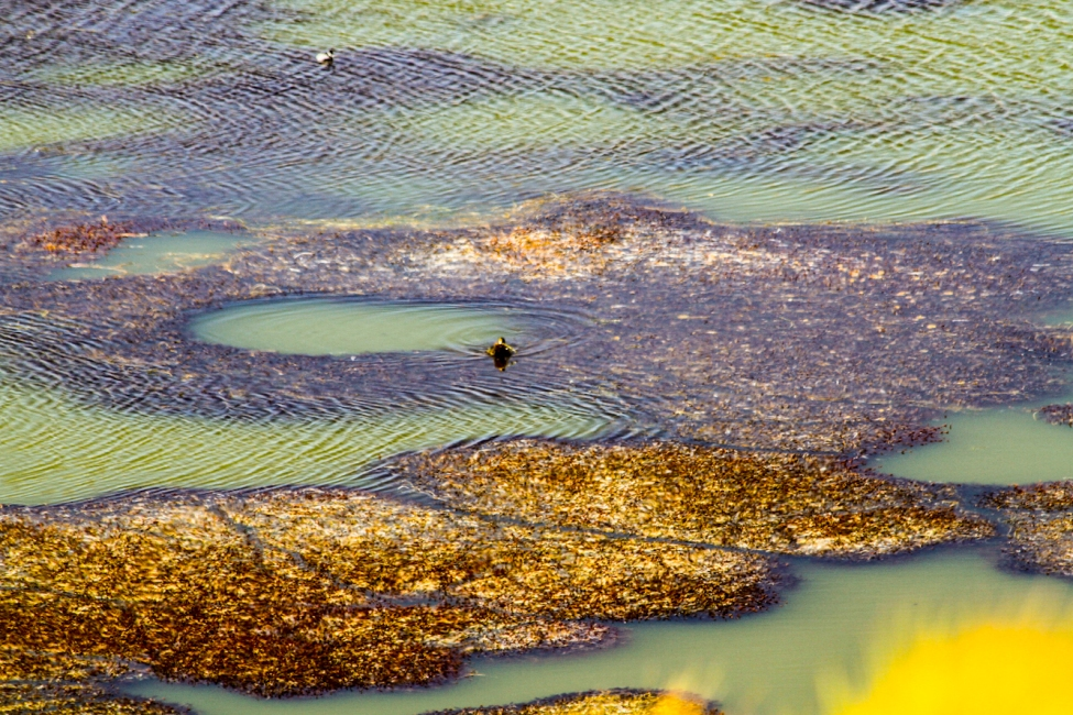 Strange algae growing in the Black Lagoon.