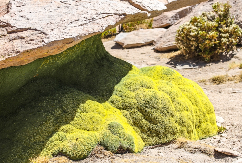 Unusual green moss