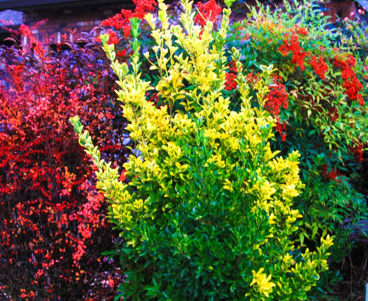 Colorful bushes